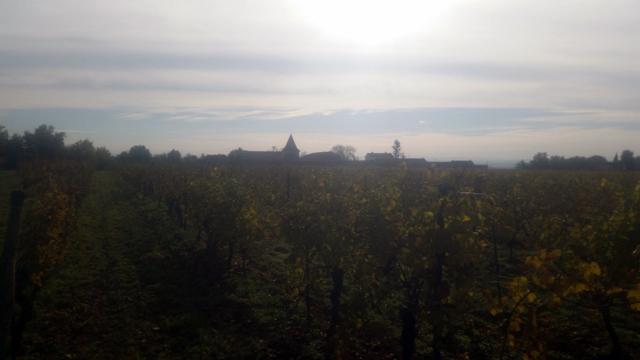 16-11-20 Rando vin primeur et chataignes 11h15 23