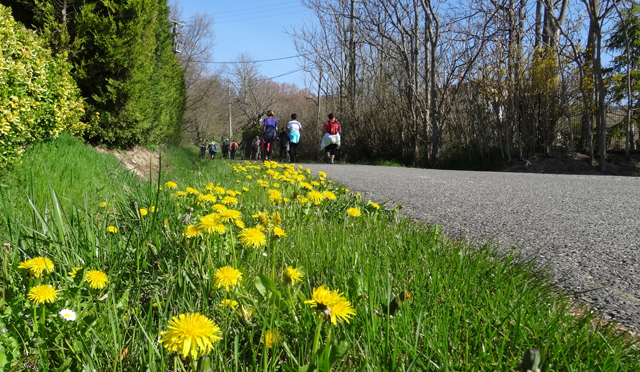 17-03-19 Fete du printemps à Loubens 10h29 16